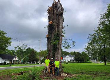 TN Tree Removal